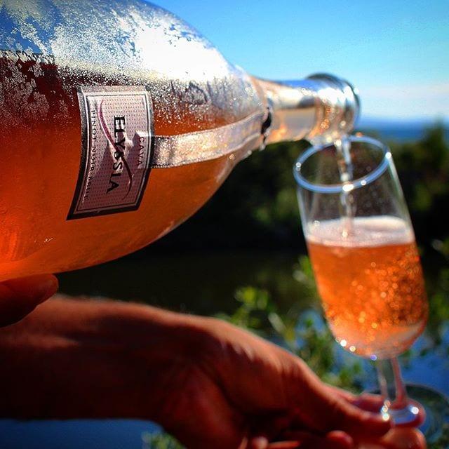 Visste ni att Freixenet producerar 4 flaskor varje sekund under årets alla dagar utan paus  Låter helt otroligt, men så producerar man årligen 130 miljoner buteljer också och här är en av dem! _______________ ? Freixenet Elyssia Pinot Noir Brut (nr 77151; 175 kr).  100% Pinot Noir.  0,9 g/ 100 ml (Brut). ? Bärig doft med inslag av röda vinbär, jordgubbar, smultron, nougat och kex.  Torr, fruktig smak med inslag av smultron, jordgubbar, päron, kex, nougat och röda vinbär.  Freixenet är världens största producent av mousserande viner och deras bodega ligger nära Barcelona i Katalonien. Varje år produceras 130 miljoner flaskor varav mindre än 1% exporteras till Sverige. Just denna skapelse tillhör deras prestige-line där de bästa druvorna används. Det är en mycket trevlig cava som är djupt rubinröd till färgen och med mycket trevliga och långvariga bubblor. Aromen går primärt i röda bär och päron med en trevlig bakomliggande nyans av kex. ? 8,0 (mycket bra Cava). _______________ @freixenet @freixenetsverige